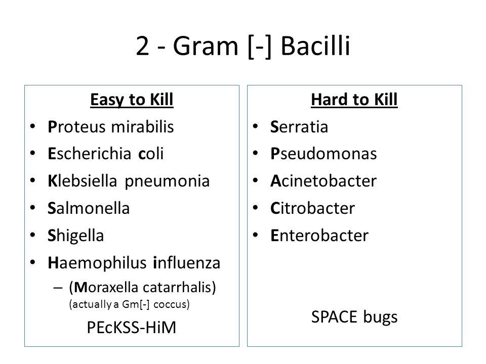 2 - Gram [-] Bacilli Easy to Kill Proteus mirabilis Escherichia coli